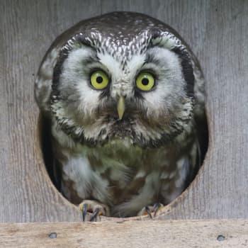 Luontoretki.: Pöllöt, pöntöt ja Putaansuu