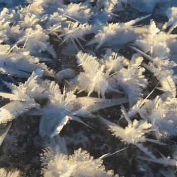 Luontoretki.: Pakkasta 25 astetta ja suopursut tuoksuu