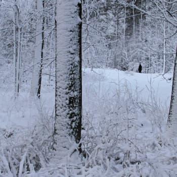 Luonto-Suomi.: Lunta ja lumitutkimusta
