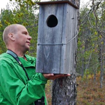 Metsäradio.: Uivelon pönttöjä tarkastamassa