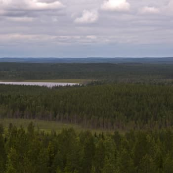 Katoava Pohjola: Uhattu metsäluontomme