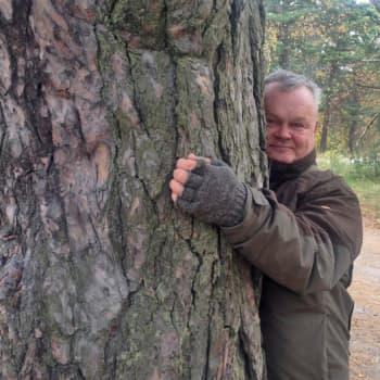Luontoretki.: 400 vuotta vanhan männyn alla