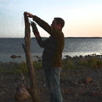 Minna Pyykön maailma: Lepakoiden muuton mysteeri