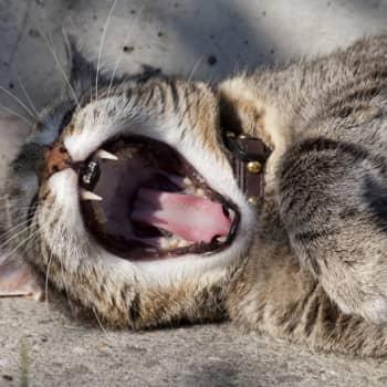 Kalle Haatanen: Kissojen maailmanhistoria