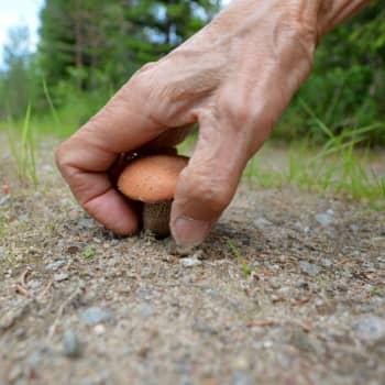 YLE Savo: Lystikäs sieniretki