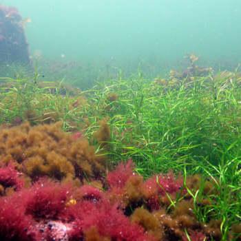 Metsäradio.: Vedenalainen luonto