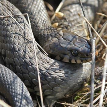 Luontoretki.: Käärmeet ovat kavereita