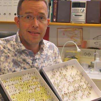 Minna Pyykön maailma: Hyönteistutkija tuntemattomien loispistiäisten ja rikostutkimuksen maailmassa