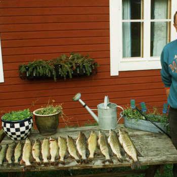 Kuusi kuvaa: Filosofi Timo Airaksinen: Kun paljon tekee, niin jotkut tilaisuudet missaa, jotkut munaa ja jotkut toteutuu