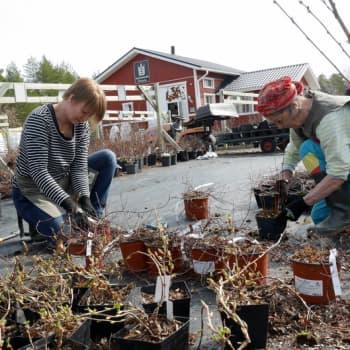 Jokapaikan Reetta: Puutteenkylän puutarhalla Kuusamossa