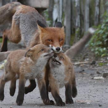 Luontoretki.: Eläinmaailman äitejä