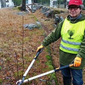 Metsäradio.: Timo Nyrhinen harrastaa puistonhoitoa
