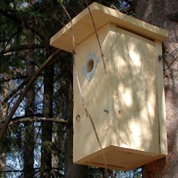 Luontoretki.: Liito-oravan reviirillä