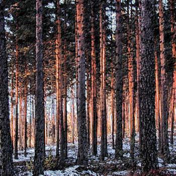 Luontoretki.: Metsien pirstoutuminen