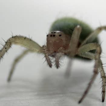 Luontoretki.: Hämähäkkiretkellä helmikuussa