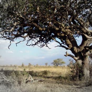 Ilmakehätutkimusta Etelä-Afrikassa: savannipalot viilentävät ilmastoa