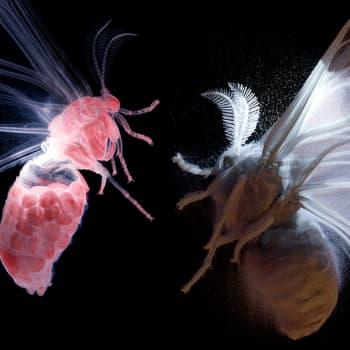 Tiedeykkönen: Yöperhosten salattu maailma