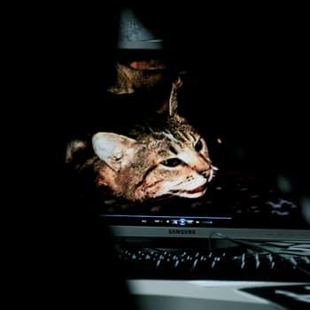 KulttuuriCocktail: Teemu Mäen kissantappovideon ruumiinavaus