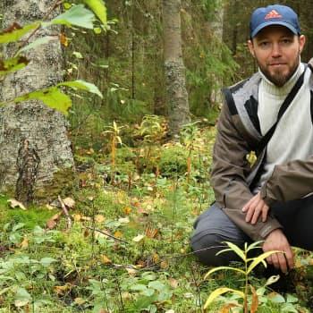 Metsäradio.: Hirvikärpäset on syksyn riesa