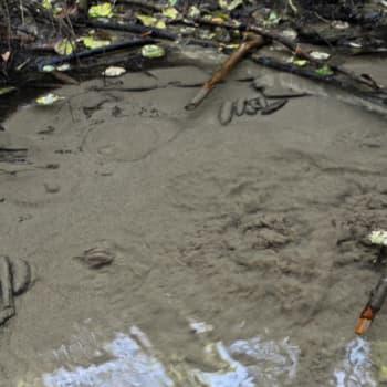 Luonto-Suomi.: Lähteet ja metsäpurot katoamassa