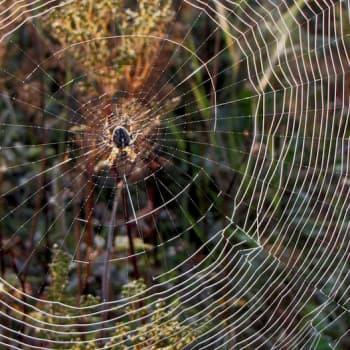Luontoretki.: Ihastuttavat hämähäkkien seitit