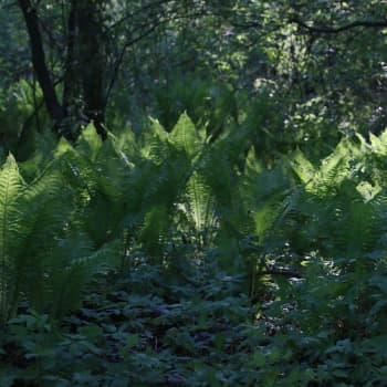 Luontoretki.: Tahvo-mäyrää etsimässä