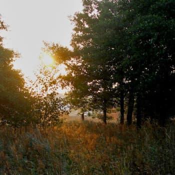 Metsäradio.: Ulkosaariston puut ja metsät