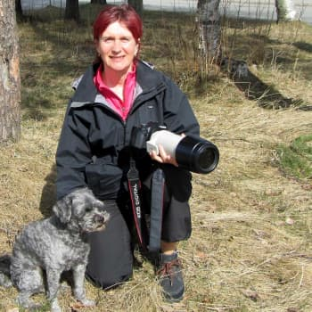 Luontoretki.: Äitienpäivä Mailis Närhen seurassa