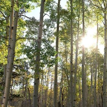 Puheen Iltapäivä: Talouden kestävä kehitys vaatii elinvoimaista luontoa ympärilleen