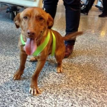 Jokapaikan Reetta: Rescue-koiria vastaanottamassa