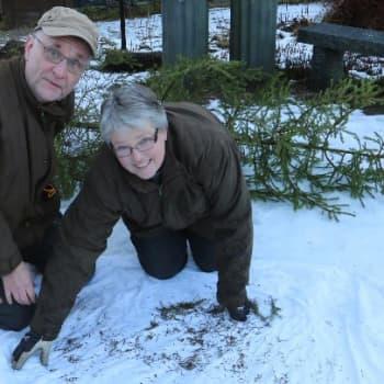 Luontoretki.: Joulukuusen vieraat