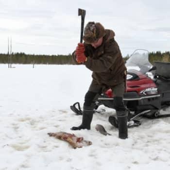 Luontoretki.: Luontomies Kari Kemppainen