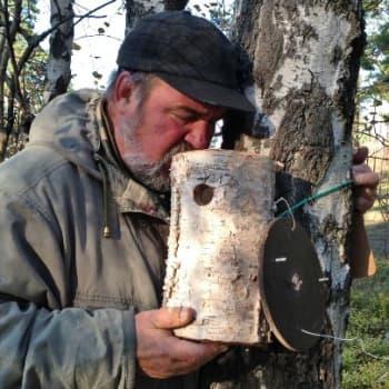 Luontoretki.: Mäntyniemen linnunpöntöt