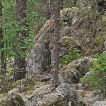 Minna Pyykön maailma: Huuhkajanpoikasten ensimmäinen kesä