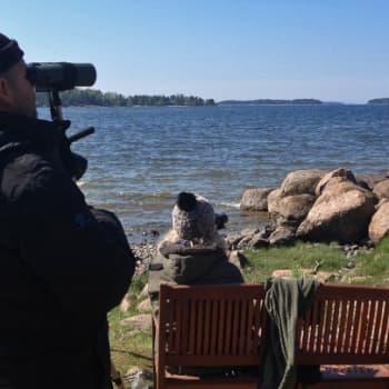Luontoretki.: Arktisia lintuja Virolahdella