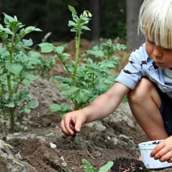 Luonto-Suomi.: Luonto-Suomen teemailta: maaperä kuhisee elämää