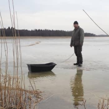 Luontoretki.: 2000 kiloa kauraa Koddervikenin jäälle