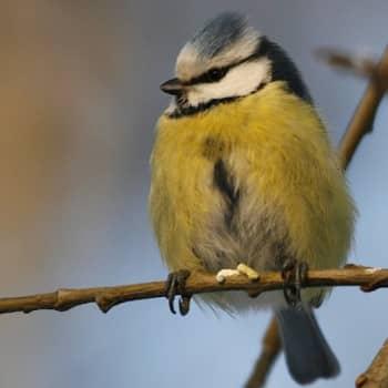 Luontoretki.: Ruokintapaikan ääniä