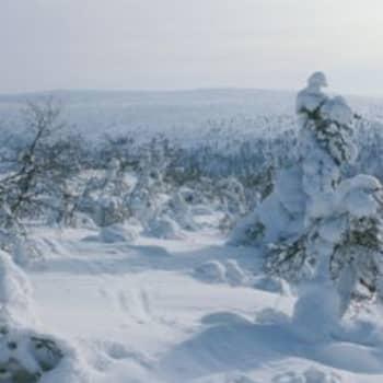 Kullankaivajan joulu 1985