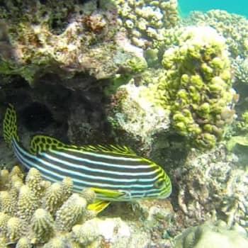 Malediivien saaret Intian valtameressä uhkaavat kärsiä pahoin ilmastonmuutoksesta.