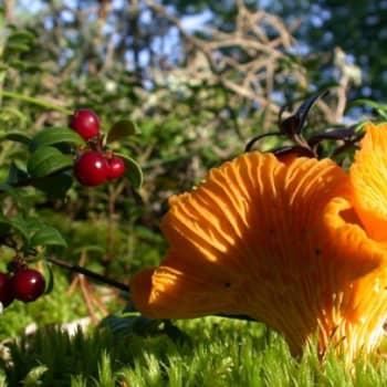 Minna Pyykön maailma: Salaperäiset sienet