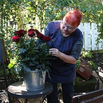 Puutarhan vuosi: Nyt istutetaan syyssipuleita