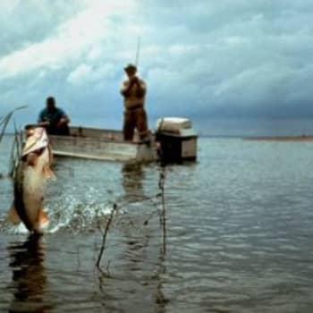 Ennen kalastettiin ruokaa pöytään, nyt kalastellaan elämyksiä