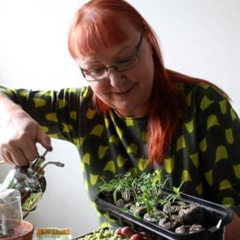 Puutarhan vuosi: Siemenkylvön salat