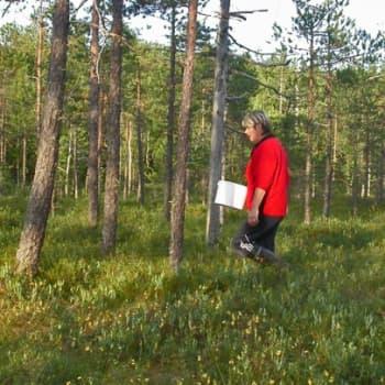 Metsäradio.: Soiden metsäojitus OSA 2
