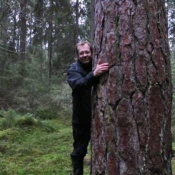 Minna Pyykön maailma: Löytyykö suomalaisuus metsästä?