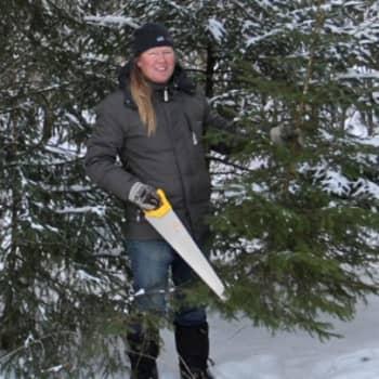 Luontoretki.: Joulukuusta hakemassa