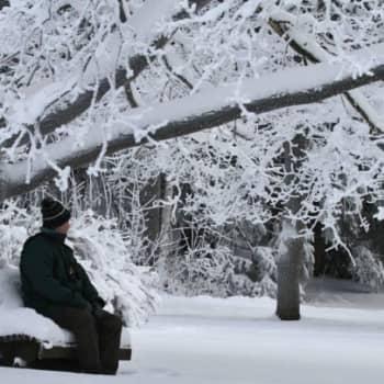 Minna Pyykön maailma: Kaupunkien vanhat puut