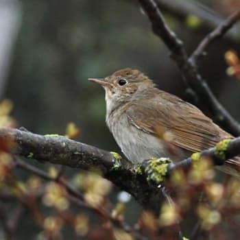 Luonto-Suomi.: Muuttuva linnusto