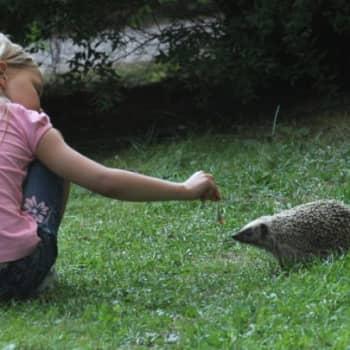 Minna Pyykön maailma: Ihmiset ja eläimet
